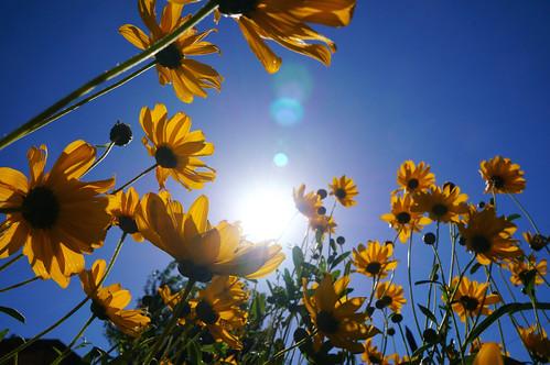 Summer Afternoon Sun - Lviv, Ukraine
