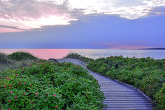 Calmness II (A:L) Tags: sea sky summer path clouds calmness tranquility view halmstad tylösand water pink rosehip hagebutte evening