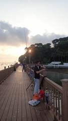 Fishing and trapping at Changi Coastal Boardwalk (wildsingapore) Tags: changi boardwalk threats fishing singapore marine coastal intertidal seashore marinelife nature wildlife underwater wildsingapore landscape fairy point loyang