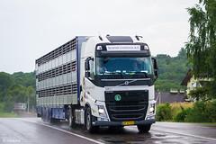 Volvo FH IV Globetrotter XL / Scandi Livestock A/S (DK) (almostkenny) Tags: lkw truck camion ciężarówka dk danmark denmark livestock reaction volvo fhiv globetrotterxl ap47430 scandi scandilivestockas