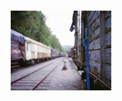 gare Hombourg (ha*voc) Tags: mamiya7ii 80mm rangefinder film 6x7 220 mediumformat fujiprovia100 urban silence empty bokeh belgium hombourg trains