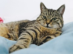 Back home (evakatharina12) Tags: cat kitty tabby pet animal bed paw face eyes indoor