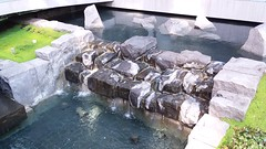 (sftrajan) Tags: landscapearchitecture plaza water waser agua marketstreet garden stone 555marketstreet 575marketstreet gardens sanfrancisco financialdistrict