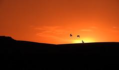 Sunset stooges (crusader752) Tags: sunset lancingclump silhouettes gulls seagulls