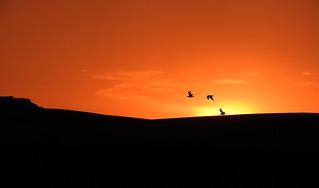 Sunset stooges