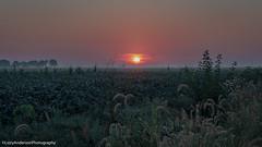 Nebraska (Lzzy Anderson) Tags: woodriver york nebraska unitedstates us morning fog mist farm sunrise field sun