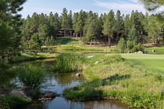 Arizona Green (Ron Drew) Tags: nikon d850 flagstaff arizona usa summer golf ponderosapine tree pine pond sream green canyoncourse foresthighlands