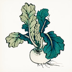 Radish by Kōno Bairei (1844-1895). Digitally enhanced from our own original 1913 edition of Barei Gakan. thumbnail