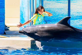 Good Job! At the Dolphins and Sea Lions Show of Enoshima Aquarium, Fujisawa : イルカとアシカのショー(新江ノ島水族館)
