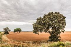 no muy lejos de algún lugar (M-OS) Tags: nikon color árbol paisaje cielo
