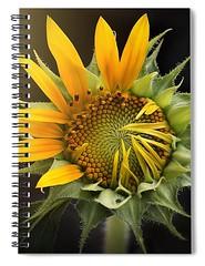 sunflower-carlene-smith (Fine Arts Designer) Tags: notebook notebooks writing write stationaery paper spiral