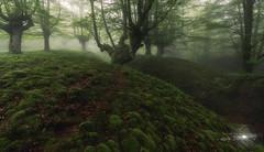 Bubbles 2 (Javier Colmenero) Tags: alavavision belaustegi bizkaia euskadi vizcaya bosque forest hayedo orozko espaã±a españa es