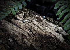 Wood Decay (Jack Heald) Tags: macromondays decay wood branch tree organic heald jack nikon 60mm macro micro