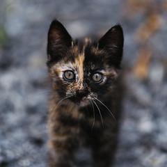 untitled3860 (Maylee Mouse) Tags: cat cats chat kitten fujifilm fuji 56mm fujinon bokeh
