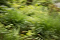 jdy143XX20180523a2088Bias-0.3 stops.jpg (rachelgreenbelt) Tags: blurs usa greenbelt northamerica midatlanticregion ouryard abstract maryland americas ghigreenbelthomesinc