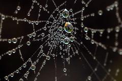 Spider Mesh (San Francisco Gal) Tags: macromondays mesh web water droplet macro