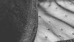 mesh (© mpg) Tags: mpg2018 hmm macro closeup mesh macromondays blackwhite bw