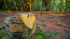 Heart Tree Stump (A.Roddis) Tags: woods cornwall poldice wheal maid valley wooded tree stump trees leaves log logs sunny evening green cornish countryside canon eos 750d