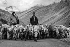Urbanite with the Shepherd and his flock (cyberdoctorind) Tags: ifttt 500px outerwear carrying shoulders recreation warm clothing man snow hiker soldier winter coat group snowshoeing backpack