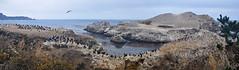 Point Lobos Panorama (James Matuszak) Tags: pointlobos panorama bay pacific cormorants carmel california coastline