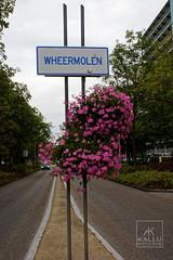 WEERMOLEN (Kallu Medeiros) Tags: kallumedeiros autochinon28mm128 auto chinon 2828 purmerend holland noordholland holanda nederland m42 lens sony alpha nex5 flower bloemen flôres weermolen