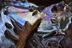 DSC_1776 (griecocathy) Tags: source eau ferrugineuse feuille aiguille pins multicolore marron gris mercure chocolat rose violet bleu crème nacre