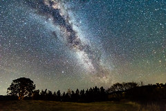 The Milky Way and Country Landscape (Merrillie) Tags: night glitter landscape gumtrees astrophotography australia rural newsouthwales astro paddock nightsky country astronomy outside trees milkyway astrology sky winter nsw stars outdoors gresford