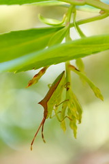 Red Green in the garden 15 (Zygonyx) Tags: pentax k1 dfa100mm macro wr biscarrosse landes atlantique