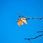 Banyoles_0066 thumbnail