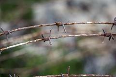 WW2 FENCE? (jimj0will) Tags: ww2 fenced fencedfriday