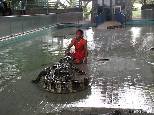 В пащу крокодилу Паттайя Таїланд Thailand InterNetri 16