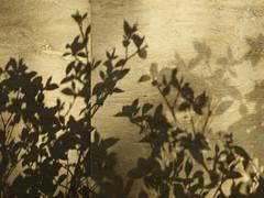 Ihavereasonstobelieve (renedepaula) Tags: urban city sampa saopaulo brasil brazil shadow silhouette floor stone plant