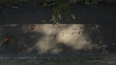 Burnley Lancashire (Zak Aesop) Tags: shadows stone steps scottpark