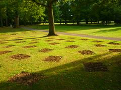 pattern (Jörg Paul Kaspari) Tags: baddriburg gräflicherpark sommer summer pattern muster rasen rasenmuster perforierung viereck quadrat lawn park blumenzwiebelfelder bulbfields