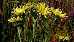 Blumen und Blüten , 76481/10496 (roba66) Tags: blumen blüten fleur flori flor flora flores bloem plants pflanzen colores color colour coleur roba66 nature natur naturalezza