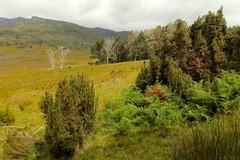 Ronny Creek - Cradle Valley (Caleb McElrea) Tags: cradlemountainlakestclairnationalpark cradlemountain unesco worldheritagesite tasmaniansouthwestwilderness tasmania wilderness