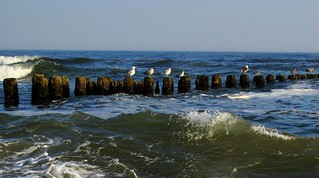 Seagulls on cutwater