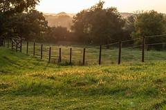 Sun dipped #HFF (NetAgra) Tags: dawsonspoint sunset pasture paddock horses fence friday grass trees woods haze mist sun summer weather