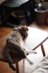 [ハチマロ通信] お昼寝マーロウ (moriyu) Tags: japan tokyo nikon d700 cat 猫 ニコン 東京