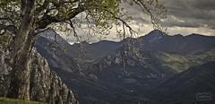 Arbol con vistas/ Tree with views (Jose Antonio. 62) Tags: spain españa asturias arboles trees naturaleza nature mountains montañas landscape paisaje