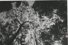 015.jpg (Tai Moura) Tags: film filme konica vx400 preto branco black white expired vencido olympustrip100r lomo lomography lomografia