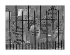 Letzte Ruhe (Babaou) Tags: niederlande nederland gelderland elburg veluwemeer friedhof jüdischerfriedhof begraafplaats dxopl sw nb bw