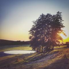 AM TULBINGER KOGEL (VINCENT MOYASHI) Tags: tulbingerkogel austria europe mood moment evening nature natur landscape landschaft colors color summer tree sunset sunlight light