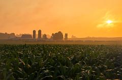 Dawn at Douglas (Nolan Majcher) Tags: we wle 6991 wheeling lake erie emd sd402 douglas oh ohio sunrise brewster sub subdivision