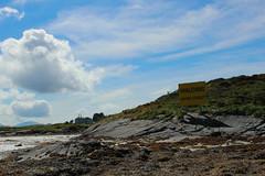 IMG_7562 (ohmil) Tags: dog pet flatcoat retriever finnøy water ocean sea blue tang island skies