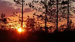Three minutes to midnight (Tulppio, Savukoski, Finnish Lapland, 20180711) (RainoL) Tags: 2018nf crainolampinen 2018 201807 20180711 finland fz200 geo:lat=6773397980 geo:lon=2817486763 geotagged july lapland lappi savukoski summer tulppio fin