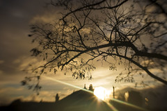 Entanglement (alideniese) Tags: 7dwf crazytuesdaytheme entwined entangled landscape tree branches silhouette blur sky stormy weather clouds sun sunset sunshine sundown evening beams sunbeams light moody alideniese lensbaby colourful rainclouds dramatic melbourne victoria australia southyarra rooftops buildings chimneys
