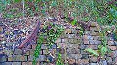Ruin_35 (Tony Markham) Tags: mine mining coal coalmine coalmining old ruins ruin abandoned disused wollongong illawarra bush bushwalk escarpment