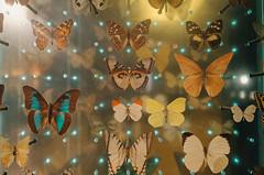 (victortsu) Tags: paris france jardindesplantes grandegaleriedelévolution papillon butterfly borboleta architecture victortsu ricohgr ricohgrii museumdhistoirenaturelle