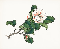 Camelia by Kōno Bairei (1844-1895) Digitally enhanced from our own original 1913 edition. (Free Public Domain Illustrations by rawpixel) Tags: ancient antique art artwork bairei bareigakan beautiful bloom blossom bouqet camelia drawing flower garden graphic handdrawing illustrated illustration japan japanese kono konobairei leaf name old paint painting petal picture plant planting publicdomain sketch vintage wallpaper watercolor